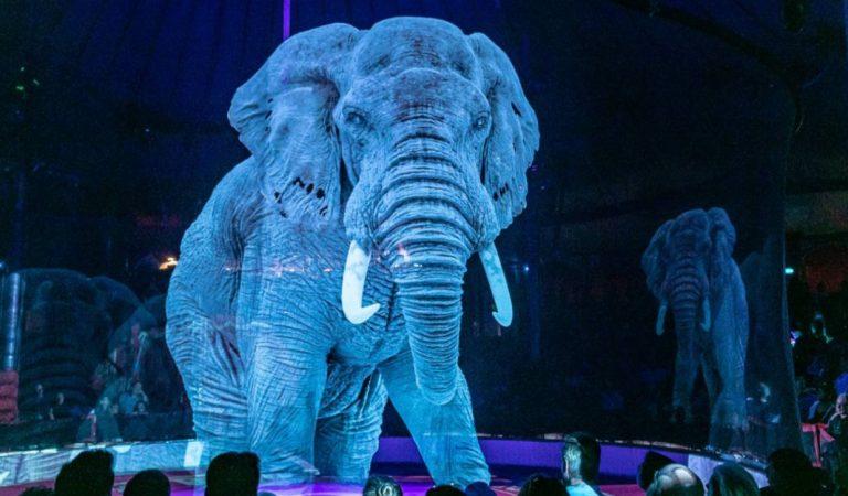 Un circo que lucha contra el maltrato animal de forma única